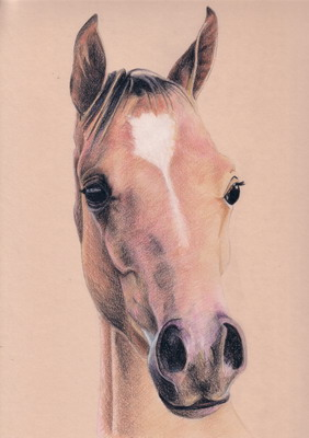 5.cheval_dessin